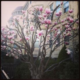 April 17: In the midst of the city's mourning, spring continues to bloom