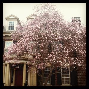 April showers have brought beautiful flowering trees in Boston this spring.