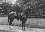 Taft Horse